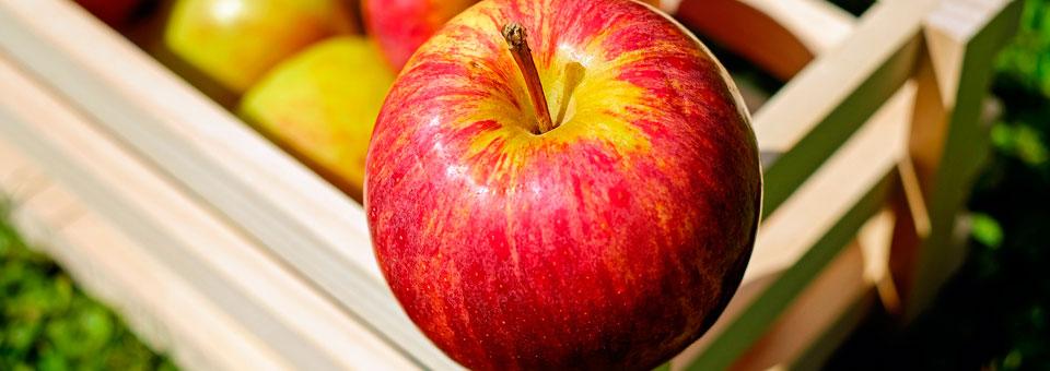 ¿Cómo realizar un correcto transporte de frutas y verduras?
